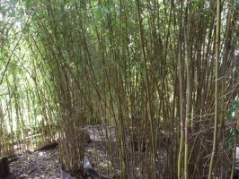 Bamboo Walls by In2FF7