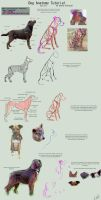 Dog Anatomy Tutorial 1 by SleepingDeadGirl