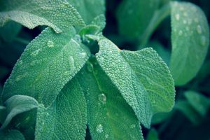 Menthe by Adripics