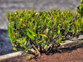 A plant HDR by Mackingster