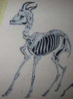 Antelope Skeleton Stencil by AdomasWillKill