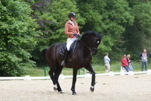 Black Warmblood Dressage Collection Piaffe by LuDa-Stock