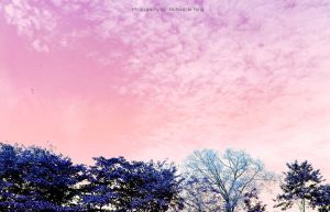 Soft Sky by deYong