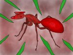 Fire Ant by jjrcyber2006