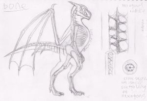 Study - Draconis skeleton by Spacer176
