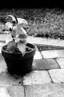 A Lonely Potted Plant by Badgertastic
