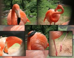 Flamingo Collage Stock by crumpstock