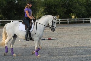 Grey dressage stock by OTRS