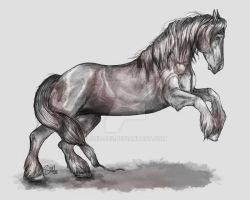 English Cob in Pencil by shilohs