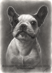 Siri - Graphite Pet Portrait by HannasArtStudio