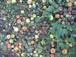 Bad Apples - aphasia100stock by aphasia100stock
