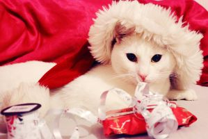 Liam the Catna claus by lost-happy-soul