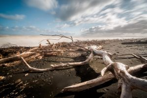 Dead wood by lomatic