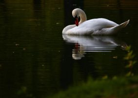 swan story 3 by igs