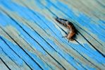 snail by chirilas