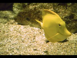 swimming lemon by Lucy-Redgrave