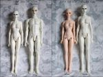 Soom Idealian female height comparison by Sarqq