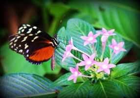 Butterfly on Flower by Michelle-xD