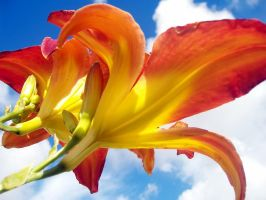 Colorful Flowers and Sky by richardxthripp