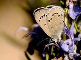 Brown Butterfly by Caitiekabob