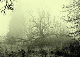 Sinister vision... by wolfcreek50