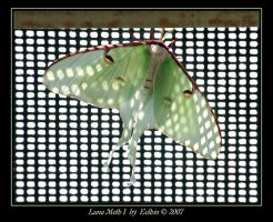 Luna Moth I 2080 by Eolhin