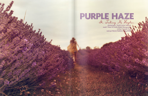 PURPLE HAZE by sarahlouisejohnson