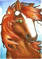 ACEO Noblestallion by Ellie-theAzurea