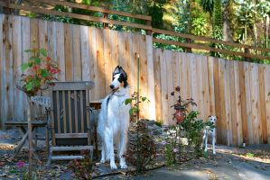Bronson and Midas by FeralWhippet