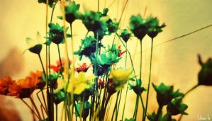 Flowers by Annabel158