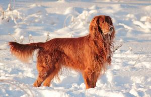 Fire on the Snow by DeingeL-Dog-Stock