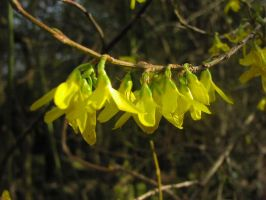 Yellow Flowers 2 by ArcadianSpaceship