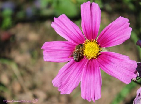 Flower and bee by linfin