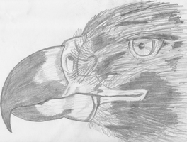 some old sketche's Eagle2_by_Bestie71