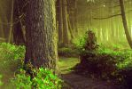 The Forest Whispers by TEMPERATE-SAGE