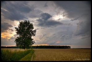 June Thunderstorm I by Haufschild