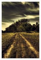 Straight Path by Riffo
