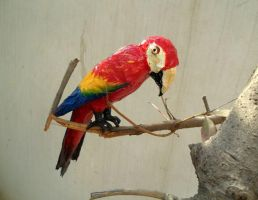 Scarlet Macaw by aakritiarts