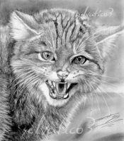 wild cat by selvatico3