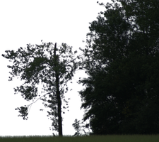 tree 24 png by gd08