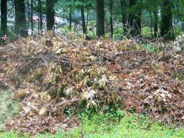 branch pile by WKJ-Stock