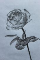 'Rose' by maaike1995