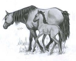 Mother and Foal by LeeDassin