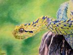 Drawing of African Bush Viper by thelowsAint