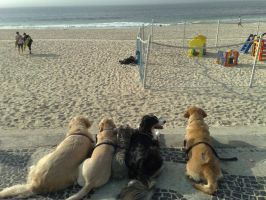 Dogs Staring at The Beach by TheDrifterWithin