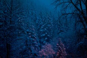 Snowy twilight 1 by Robby-Robert