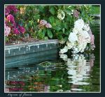 Lagoon of flowers by Buble