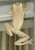 frog 1 by Irie-Stock