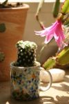 little cactus in a mini cup by Nexu4