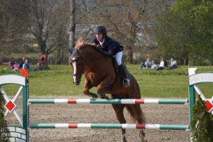 Chestnut Horse - Show Jumping stock - 11.2 by MagicLecktra